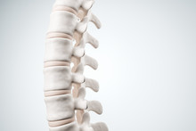 Realistic Human Spine Illustration. Side View On The White Background. 3d Render.