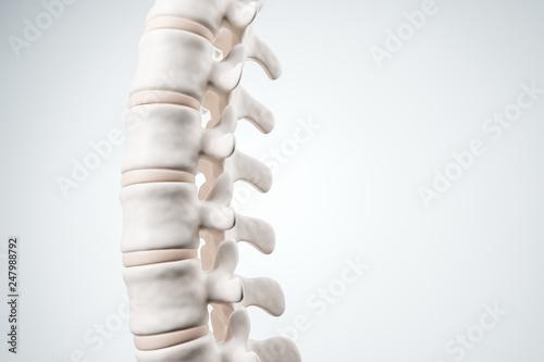 Fototapeta  Realistic human spine illustration