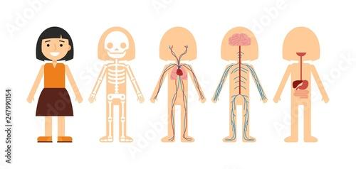 Obraz na plátně  Vector illustration of body anatomy
