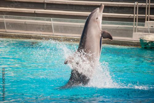 Obraz na dibondzie (fotoboard) delfiny