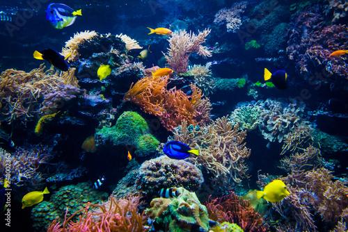 Foto op Plexiglas Koraalriffen beautiful underwater world