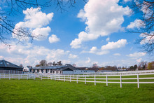 Green Pastures Of Horse Farms. Country Summer Landscape