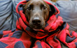 canvas print picture - Pet puppy dog wrapped in blanket to keep warm from winter cold.