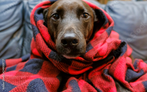 Pet puppy dog wrapped in blanket to keep warm from winter cold. Canvas Print