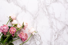 Dried Pink Roses On Marble Bac...