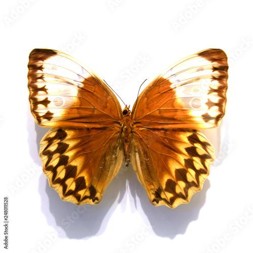 Deurstickers Vlinder beautiful butterflies in the white background