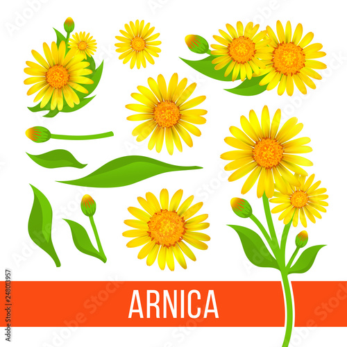 Arnica floral design elements Wallpaper Mural