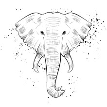 Elephant Head, Black White Hand Drawn Style With Ink Splatters