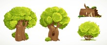 Set Of Two Old Thick Trees With Summer Green Foliage, Old Mossy Stump  And Shrub Vector Drawing Isolated On White Background