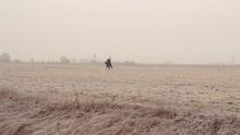 On A Winter Field Rider Rides ...