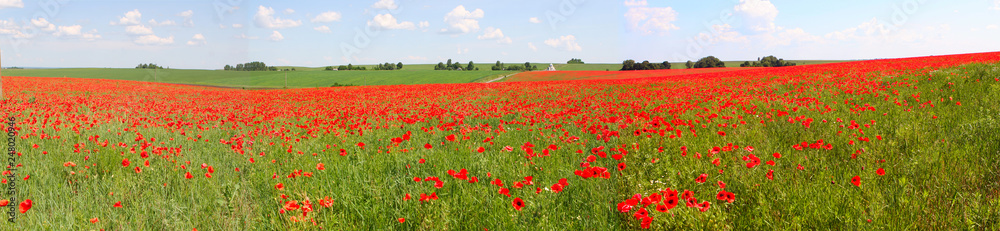 Fototapety, obrazy: Flowers The red poppies bloom on a wild field. Beautiful red poppy fields with selective focus. soft light Natural remedies. Field of red poppies. Lonely poppy in the distant Orthodox temple