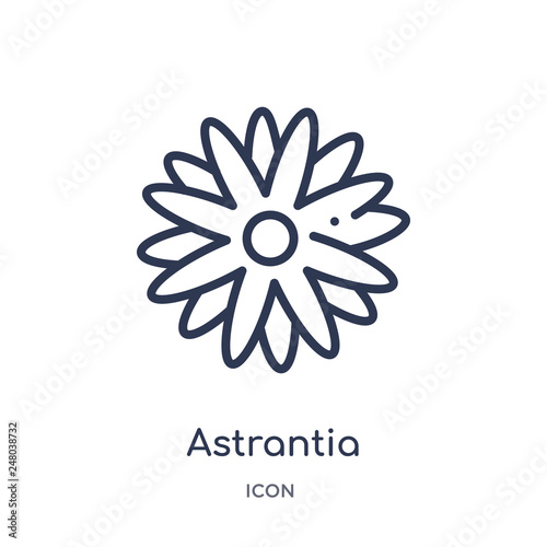 astrantia icon from nature outline collection Wallpaper Mural