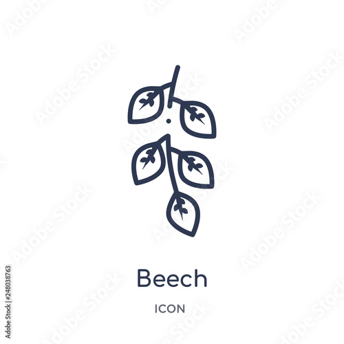 Obraz na plátně beech icon from nature outline collection