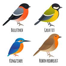 Set Of Cartoon Isolated Birds, Great Tit, Kingfisher, Bullfinch, Robin Redbreast