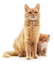 Cat With Kitten.