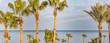 Palmen Panoramen im Wind