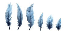 Watercolor Illustration Set Of Isolated Blue Feathers On A White Background. Watercolour Blue Feathers.