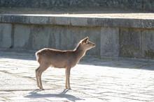 奈良公園 東大寺 鹿...