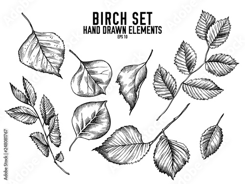 Vector collection of hand drawn black and white birch Wallpaper Mural