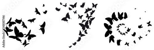 Foto black butterfly, isolated on a white