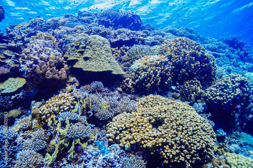 Foto op Aluminium Onder water Coral Reef at the Red Sea, Egypt
