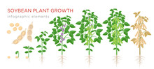 Soybean Plant Growth Stages In...
