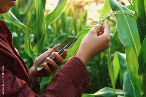 woman farmer using technology mobile in corn field Wallpaper Mural