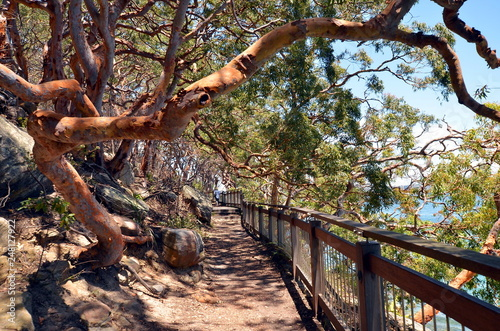 Valokuva  Bush walk in wild forest in Sydney Harbor National Park, Sydney, Australia