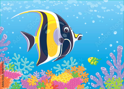 Photo Funny butterfly fish swimming in blue water over amazing colorful corals on a re
