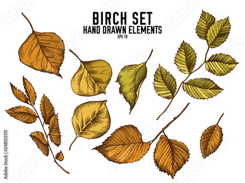 Obraz na plátně  Vector collection of hand drawn colored  birch