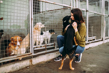 Young Woman Choosing Which Dog To Adopt From A Shelter.