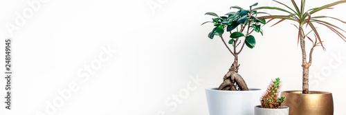 Spoed Fotobehang Bonsai Shelf on a white empty wall. Copy space. Place for text. Scandinavian style. Bonsai in a white pot, cactus and palm in a golden casing. Panoramic real photo. Home decoration