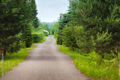 Foto op Canvas Weg in bos Rural road in the countryside in dusky weather