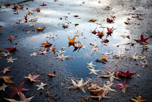 Leaves On Street, Seattle, Washington