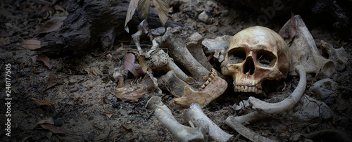 Fototapeta The skulls and pile bone in pit the graveyard; discover by dig in cemetery
