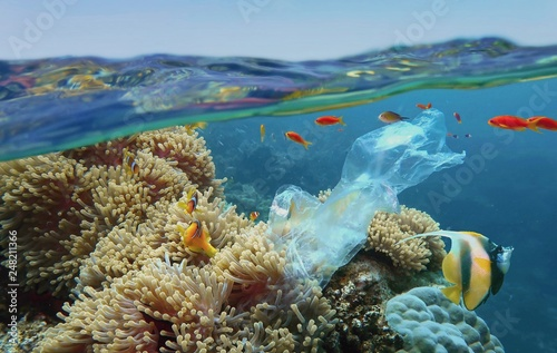 The world ocean pollution. Beautiful tropical coral reef with sea anemones, clownfish and colorful coral fish - polluted with plastic bag. The sea surface view. Environmental protection concept