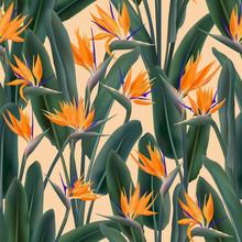 Crane Flower Pattern. Strelitz...