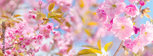 Deurstickers Kersenbloesem border springtime background with pink blossom