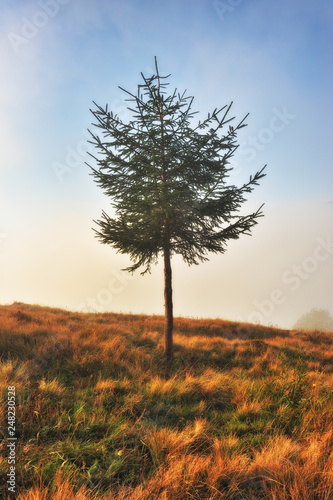 Deurstickers Surrealisme autumn tree. picturesque tree in the fog. foggy dawn