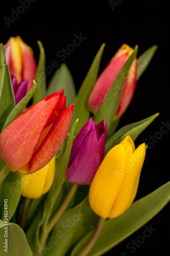 Poster Tulp Tulips on black background