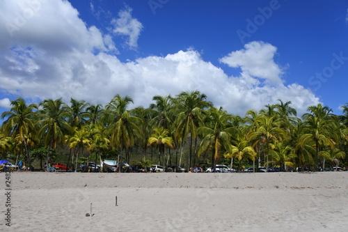 Palm Trees Beach - Samara Beach Costa Rica Canvas Print