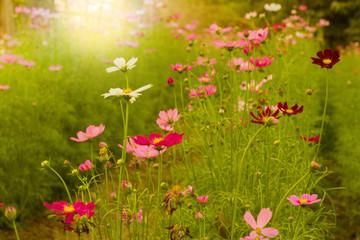 Obraz na płótnie Canvas flowers in the grass