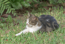 Gray And White Tabby Cat Lying In Grass