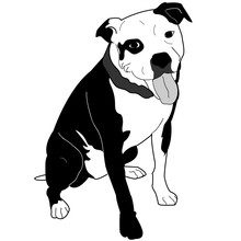 American Staffordshire Terrier, Pitbull, Bully Breed