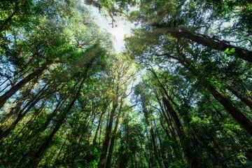 przyroda i las