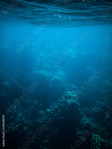 Photo underwater photo of coral reefs in red sea with blue water