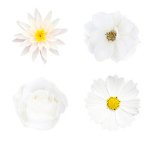 Collection Of  White Flower  Isolated On White Background, Soft Focus And Clipping Path