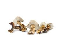 Dried Mushroom Boletus Edulis ...