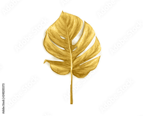 Poster Fleur Tropical golden leaf monstera on white background. Top view, flat lay