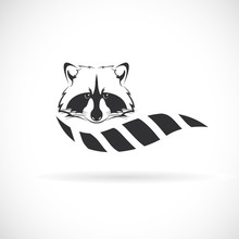 Vector Of Raccoon Design On Wh...